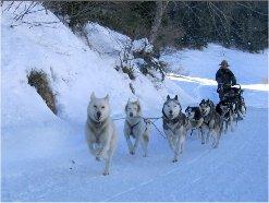 Randonnée de traîneaux à chiens